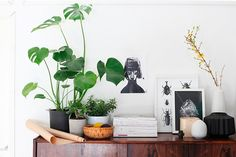 Indoor Plants and botanical illustration