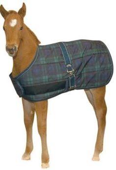 Weatherbeeta Growing Foal Blanket Blackwatch by Weatherbeeta. $40.49. 300 Denier Polyester Outer. 180g Polyfill. Surcingle. Adjustable Front Closures. The Weatherbeeta Growing Foal Blanket will keep your foal warm and comfortable during colder weather. The blanket can be adjusted as the foal grows.
