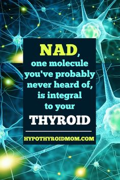 There's a molecule in every single one of our living cells that's also pretty hot in the world of anti-aging right now. It's called NAD (nicotinamide adenine dinucleotide) and it's integral to your thyroid health. Thyroid Test, Thyroid Issues, Thyroid Disease, Autoimmune Disease, Pizza Nutrition Facts, Health And Nutrition, Health And Wellness, Adrenal Health, Adrenal Fatigue