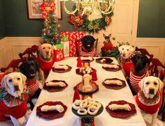 Estes cachorros ganharam a sua própria ceia de Natal #timbeta #sdv #betaajudabeta