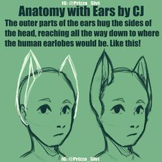 [REPOST AGAIN CUZ I MESSED UP AGAIN]    Fantasy Anatomy Lesson with CJ    Cuz ear canals dont go right into the brain and evolution is weird with these hybrids    Inspired by Fireflufferz on twitter    Featuring #prizza_oc_jayc    #neko #digitalart    Ps if you draw people with cat ears A N D human ears on the same head you make me sick