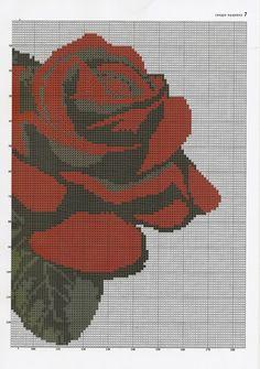 Red rose (r)