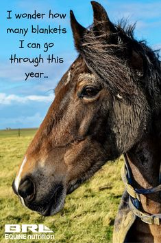 Almost all of us have known a horse like this! #BRLEquine #naughtyponies