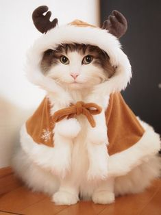 Want more Cute Cat Photos? Check out our website by clicking the photo - Adorable Cats and Cute Kittens - Katzen Bilder Cute Kittens, Cute Baby Cats, Cute Baby Animals, Funny Animals, Funny Cats, Animals Images, Kittens Meowing, Pretty Cats, Beautiful Cats