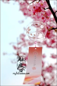 Edo Japanese wind chimes.