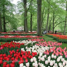 Keukenhof will be open from 22 March - 13 May 2018!   #travel to the #tulipsinholland spring 2018 http://tulipsinholland.com/sign-up-for-weekly-flower-update/?utm_content=buffer31e32&utm_medium=social&utm_source=pinterest.com&utm_campaign=buffer