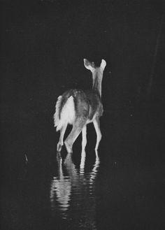 #darkness #photography #beauty #black #art #melancholy