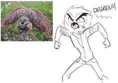 yo. — Doodles - Vanoss the owl boi i googled some owl...