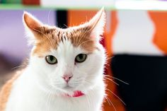 Animal shelter cat, by Foxymoron, BB flickr Pool