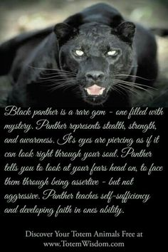 Black -panther-totem-image-and-meaning.html Learn all about the black panther power animal, how its eyes penetrate the soul and help you develop your intuition and inner strength. Beautiful Cats, Animals Beautiful, Animal Meanings, Animal Spirit Guides, Animal Medicine, Power Animal, Black Jaguar, Tatoo Art, Big Cats