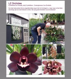 Grower LZ Orchidee #Orchidee