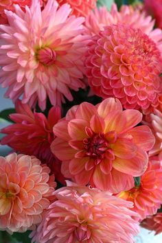 Google Image Result for http://images.fineartamerica.com/images-medium-large/dahlia-bunch-paul-slebodnick.jpg