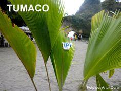 """DEPARTAMENTO DE NARIÑO, COLOMBIA    - RUTA DE COLORES: TUMACO. Tumaco es una ciudad Colombiana del Departamento de Nariño, situada a 300 km de San Juan de Pasto. Se conoce como """"La Perla del Pacífico"""". Entrar > https://www.youtube.com/watch?v=ESn_mWgI9h8"""
