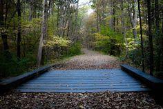 #magical #boardwalk #walkinthewoods #railtrail #purgatorychasm #bridge #woods #hsl by westonpearce