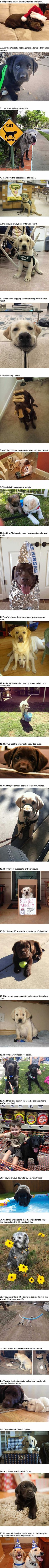 Labradors are the cutest
