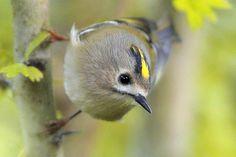 NABU-Grundsatzprogramm Vogelschutz