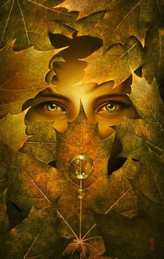 eyes of autumn  neat picture