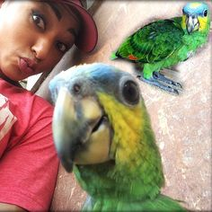 Photobombing this pretty baby parrot in selfie mode. He loves the camera . He's just one several different bird species living in the estate's trees.  #cocoa #trinidad #agriculture #nature #animals #birds #parrot #greenparrot #cacao #trinidadagriculture #grancouva #grancouvachocolate #love #selfie #photobomb #browngold #chocolate #cacaotree #cocoapod by sanjuanestatecacao http://www.australiaunwrapped.com/