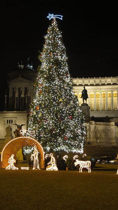 Christmas in Rome, Italy. What a beautiful lighted nativity! http://imgsnpics.com/christmas-in-rome-italy-what-a-beautiful-lighted-nativity/