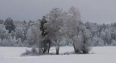 снежный наряд. by yact-viktor http://ift.tt/1M1BnZF