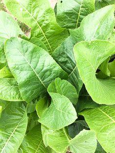 IMG_0922 Slim Body, Edible Flowers, Food Hacks, Health Tips, Herbalism, Plant Leaves, Stuffed Mushrooms, Food And Drink, Veggies