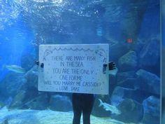 Aquarium surprise proposal