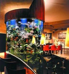 Those are the ideas of aquarium kitchen which can be your inspirations. Placing an aquarium in the kitchen is a smart idea to have a unique decoration. Glass Fish Tanks, Cool Fish Tanks, Saltwater Fish Tanks, Tropical Fish Tanks, Saltwater Aquarium, Aquarium Stand, Home Aquarium, Reef Aquarium, Aquarium Fish Tank