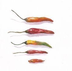 "Original Watercolor "" Chilli "" 7x7.5 , Watercolr Chilli, Watercolor vegetables, Home Decor , Kitchen Art, Chilli Painting, Botanical art by TongmakStudio on Etsy"
