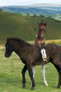Foals by Duncan George
