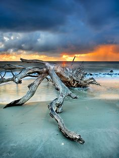 I love it because there are no houses on the beach, only nature  Sunrise on Jekyll Island