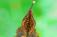 Seeds by 2Gry, via Flickr (2Gry, 2009)