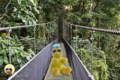 Heute mal #BigB mit neuer Frisur. Sieht aber irgendwie ziemlich nach #Daniele aus... #ibes #ibes2018 #dschungel #dschungelcamp #dschungelprüfung #negroni #bigbird #cooler #gelber #erpel #yellow #drake #schrader #beckum #picoftheday #wow #amazing #nice #kuscheltier #plüschtier #stofftier Drake, Fair Grounds, Fun, Stuffed Toys, Hairstyle, Lol, Funny