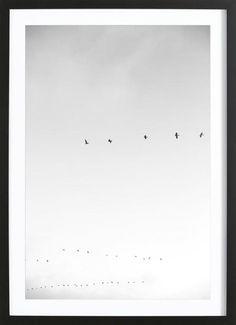 Pismo Pelicans als Gerahmtes Poster von clintonfriedman | JUNIQE