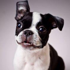 Mini-dientesss! :)