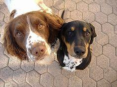 Créer une association de protection des animaux