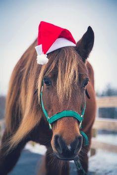 season 39 s greetings horsin around christmas horses. Black Bedroom Furniture Sets. Home Design Ideas