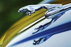 The 36 Best Jaguar Stuff Images On Pinterest Jaguar Jaguar Cars