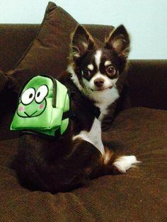 กระเป๋าใส่ตังค์ของสัตว์เลี้ยง  https://www.facebook.com/kowneawpai?fref=photo