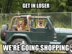 Big dogs drive Jeep Wranglers with the TOP DOWN! Little dogs expect YOU to drive! Little Dogs, Big Dogs, Small Dogs, Large Dogs, Funny Animal Pictures, Funny Animals, Cute Animals, Dog Pictures, Funny Photos