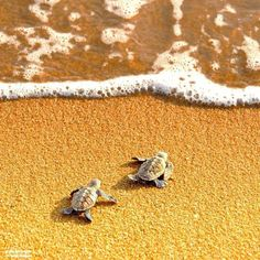 Baby Turtles..almost there...