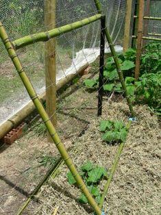 Trellis Designs For Vegetable Gardening | Easy Vertical Gardening Ideas for Beginners
