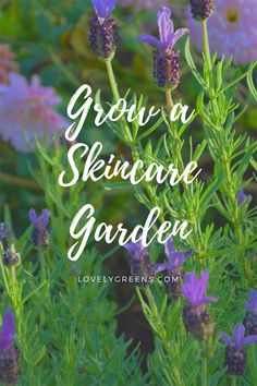 Grow a Beauty & Skincare Garden: 20+ Flowers, and herbs that heal and benefit the skin