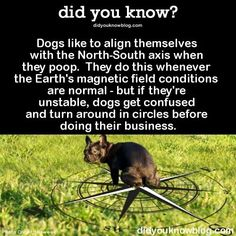 Not sure this is true but interesting thought.