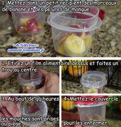 Que Faire Contre les Mouches à Fruits ? LE Piège Maison Efficace.