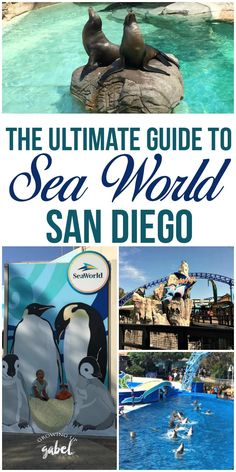 AD: Heading to SeaWorld San Diego? CLICK HERE to get all the tips and tricks for rides, shows, tickets and more! #SeaWorld #SanDiego #Travel #FamilyTravel