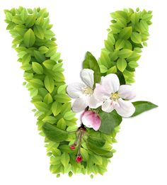 Abecedario con Hojas Verdes y Flores Blancas. Alphabet with Green Leaves and White Flowers. Cute Letters, Fancy Letters, Picture Letters, Alphabet Art, Monogram Alphabet, Alphabet And Numbers, Hand Lettering Fonts, Lettering Design, Arabesque