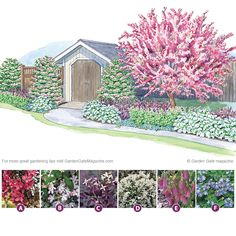 From eyesore to gorgeous Don't let your garden shed be the focal point! This design helps blend it seamlessly into your yard. An ornamental tree brings the shed into scale with its surroundings, while viburnums hide an awkward corner and cover hard edges. Other plants, such as deutzia and clematis, add long-blooming flowers, as well as colorful foliage.  Just keep clicking to learn more about a garden that can transform any area — even one just for storage!   Garden Gate eNotes