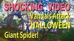 Shocking Vandalism of Giant Spider HALLOWEEN Display: Saul Films Shocking Vandalism of Giant Spider HALLOWEEN… More at hauntersweb.com