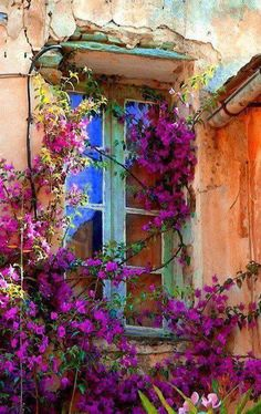 Lovely Flowers Embracing and Holding a Quaint Neighborhood Window