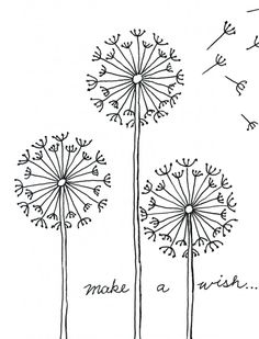 dandelion drawing step by step